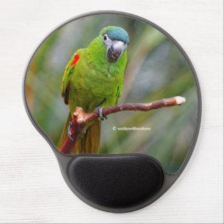El mini Macaw de Hahn/Rojo-Llevó a hombros el Alfombrillas De Ratón Con Gel