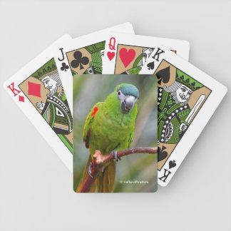 El mini Macaw de Hahn/Rojo-Llevó a hombros el Barajas