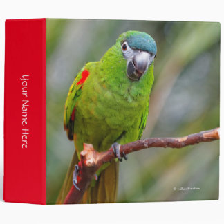 """El mini Macaw de Hahn/Rojo-Llevó a hombros el Carpeta 2"""""""