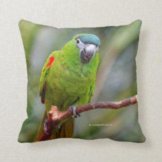 El mini Macaw de Hahn/Rojo-Llevó a hombros el Cojín