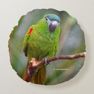 El mini Macaw de Hahn/Rojo-Llevó a hombros el Cojín Redondo
