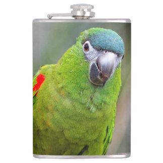 El mini Macaw de Hahn/Rojo-Llevó a hombros el Petaca