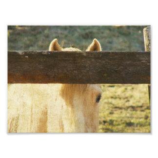 El mirar a escondidas a través de la cerca fotografía
