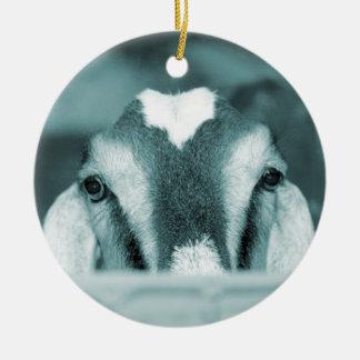 El mirar a escondidas azul del bw de la gama de Nu Ornamentos De Reyes