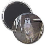 El mirar fijamente de Meerkat Imán Redondo 5 Cm