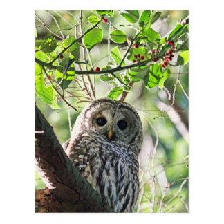 El mirar fijamente del búho barrado tarjeta postal