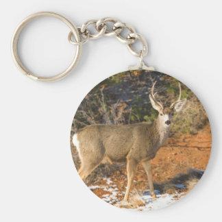El mirar fijamente del ciervo mula llavero redondo tipo pin