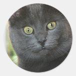 El mirar fijamente del gato pegatina redonda