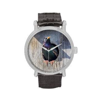 El mirar fijamente europeo relojes de pulsera