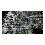 El mirar para arriba los árboles de Aspen en bosqu Tarjetas Personales