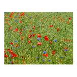 El mit de Sommerfeld roten el und blauen Blumen Postal