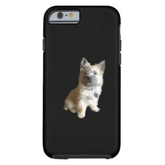 ¡El mojón Terrier más lindo nunca ¡Más lindo que