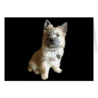 ¡El mojón Terrier más lindo nunca!  ¡Más lindo que Tarjeta