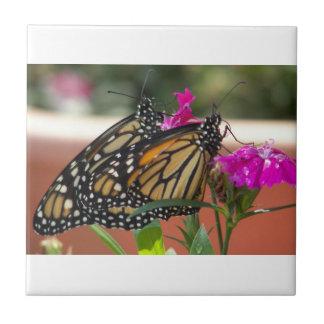El monarca hermana #1-tile azulejo cuadrado pequeño