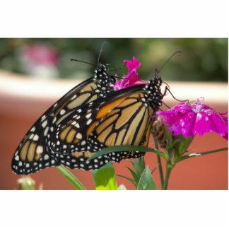 El monarca hermana la escultura de #1-photo fotoescultura vertical