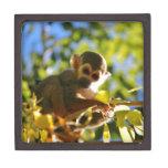 El mono brilla cajas de regalo de calidad