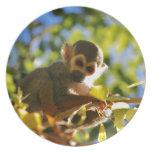 El mono brilla platos