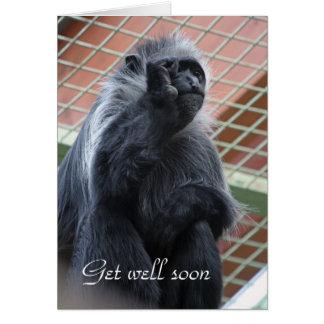 El mono consigue pronto la tarjeta bien