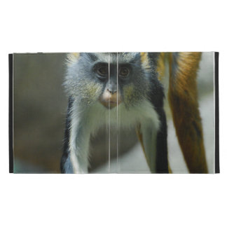 El mono del lobo lindo de Guenon