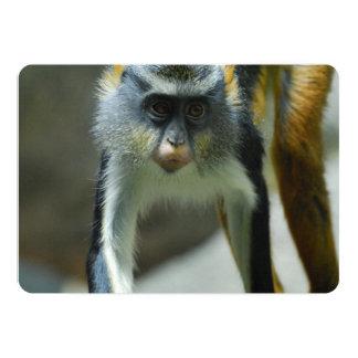 """El mono del lobo lindo de Guenon Invitación 5"""" X 7"""""""