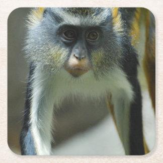 El mono del lobo lindo de Guenon Posavasos Desechable Cuadrado
