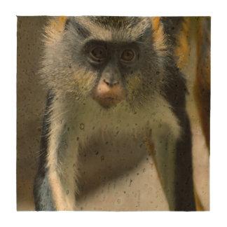 El mono del lobo lindo de Guenon Posavasos