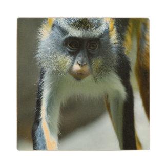 El mono del lobo lindo de Guenon Posavasos De Arce