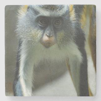 El mono del lobo lindo de Guenon Posavasos De Piedra