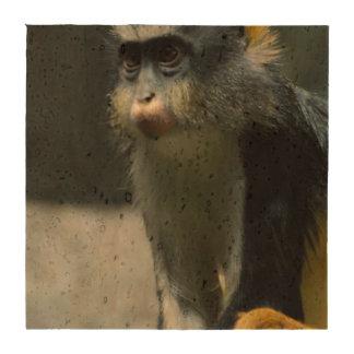 El mono del lobo posavasos