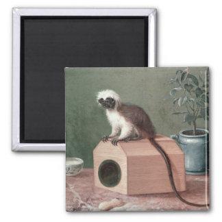 El mono preferido de Carl Linnaeus Imán Cuadrado