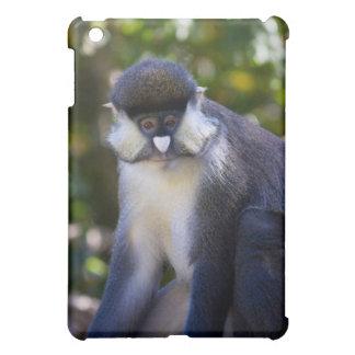El mono punto-sospechado de Schmidt