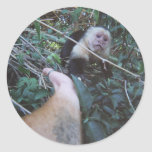 El mono ve el mono hacer etiquetas redondas