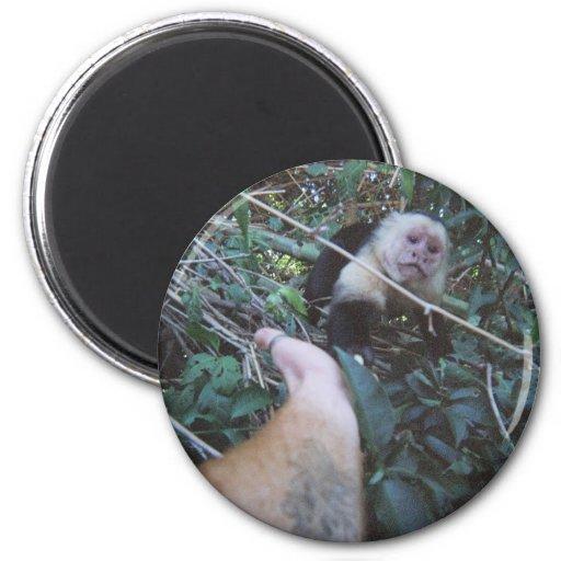 El mono ve el mono hacer imanes de nevera