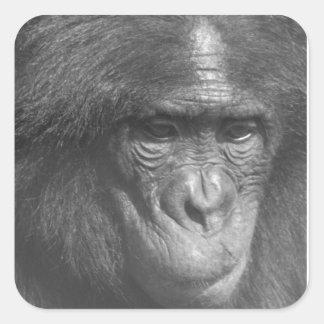 El mono ve el mono hacer pegatina cuadrada