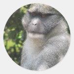 El mono ve, mono hace al pegatina