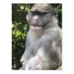 El mono ve, mono hace la postal