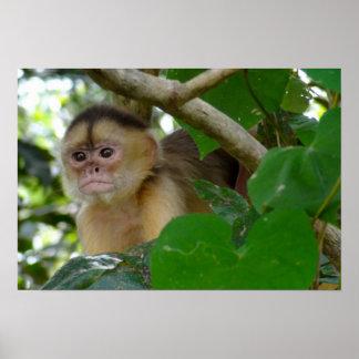 El mono ve… póster