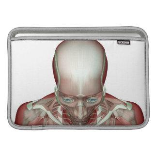 El Musculoskeletan de la cabeza y del cuello 2 Funda Macbook Air