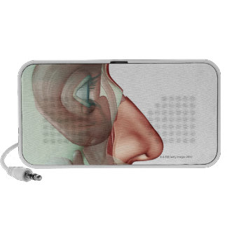El Musculoskeleton de la cara 2 iPhone Altavoz