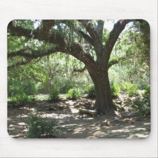El musgo de la isla de Avery cubrió el árbol Tapetes De Raton