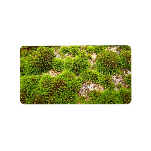 El musgo verde cubre la roca etiqueta de dirección