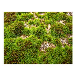 El musgo verde cubre la roca tarjetas postales