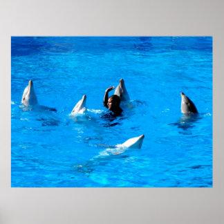 El nadar con cinco delfínes en España Poster