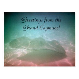 El nadar con la tarjeta magnífica de Jamaica de Tarjetas Postales