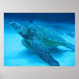 El nadar con las tortugas de mar 2 impresiones