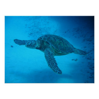 El nadar con las tortugas de mar 4 impresiones