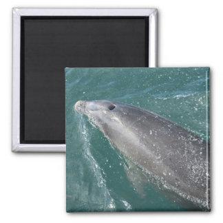 El nadar con los delfínes y el reloj del delfín imán cuadrado