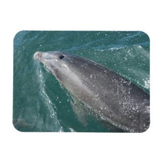 El nadar con los delfínes y el reloj del delfín imanes de vinilo