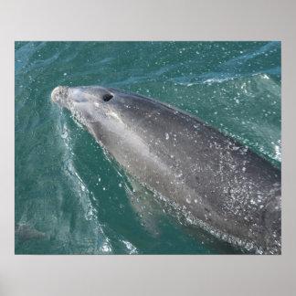 El nadar con los delfínes y el reloj del delfín póster