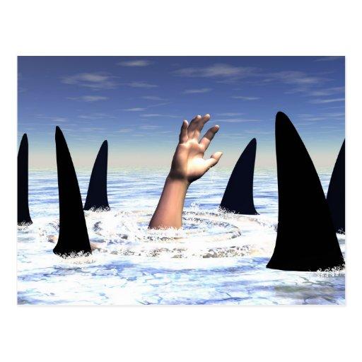 El nadar con los tiburones postales